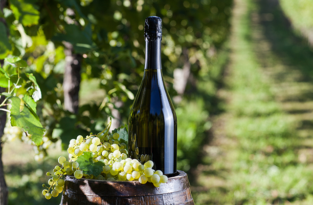 シャンパン ブドウ品種
