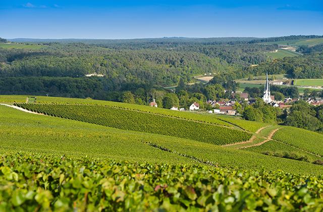 シャンパーニュ ブドウ畑
