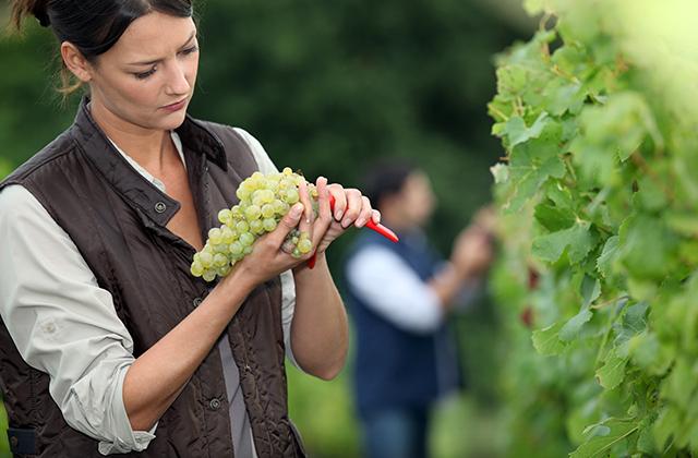 ワイン 生産者