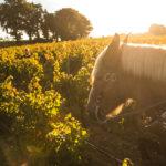 自然派ワインはブームになる?