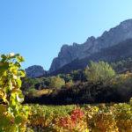 ジゴンダス ワイン!産地や特徴、おすすめ生産者とは?