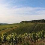 シャブリとはどんなワイン?産地や味の特徴や料理との相性まで徹底解説!