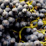 マセラシオン・カルボニックの基礎知識!ワインの特徴とは?ボジョレーヌーボーだけじゃない?